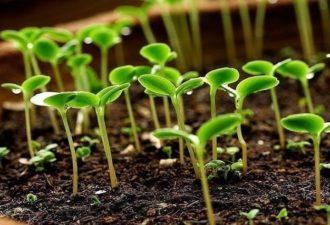 СУПЕР быстрый способ выращивания рассады