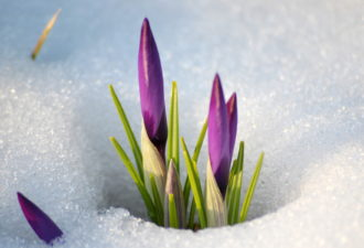 Прогноз на 13 марта