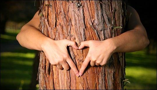Связь между деревом и человеком