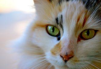 Зачем ваша кошка пришла именно к вам по знакам зодиака