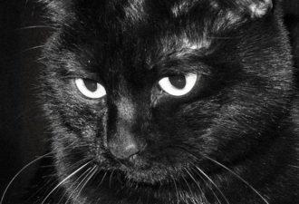 Кошка — магическое животное