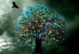 Подзарядка от деревьев-доноров