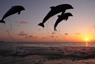 Дельфины... иной разум на земле?