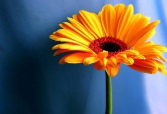 Как выбрать свой цветок-оберег