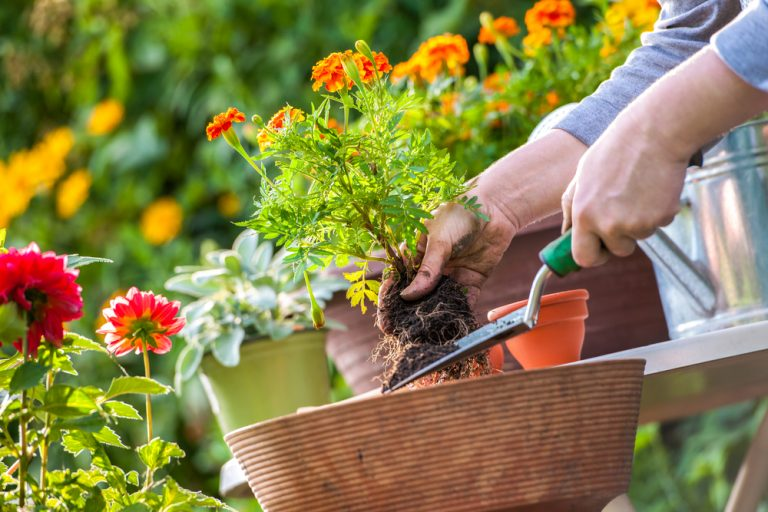 мелких подработка по высадка растений можете