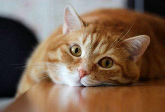 Кошка-талисман: выбираем любимца по Знаку Зодиака