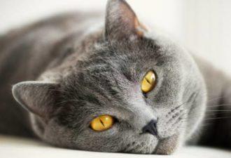 Кошка в доме: приметы про кошек