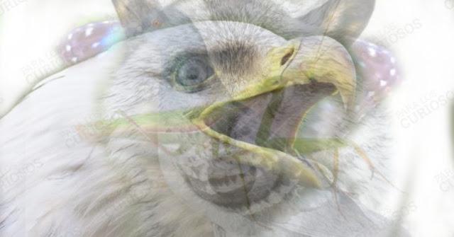 Тест: животное, которое вы первым увидите на фото, раскроет ваш характер