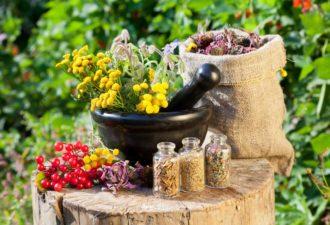 14 растений, обладающих защитными магическими свойствами