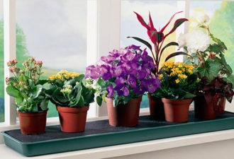 Растение-талисман в доме поможет сохранить любовь и принесет счастье