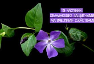 15 растений, обладающих защитными магическими свойствами