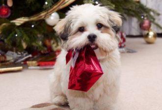 5 способов загадать желание на Новый год Желтой Собаки