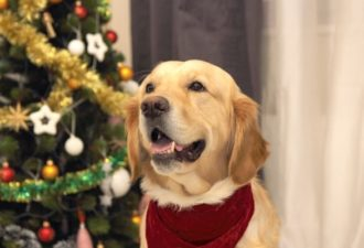 Каким будет 2018 год Желтой Земляной Собаки: прогнозы астрологов
