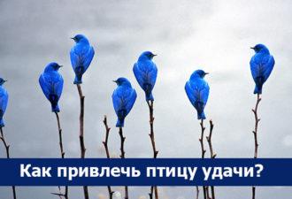 Как привлечь птицу удачи?