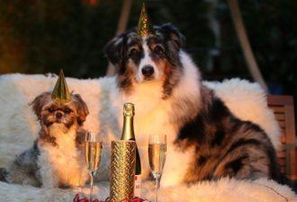 Кому из Знаков Зодиака в 2018 году Желтая Собака подарит приятные сюрпризы, а кому не стоит перегибать палку