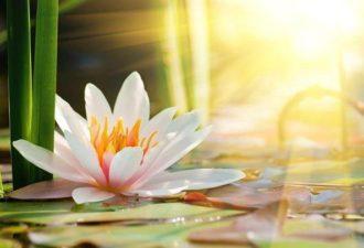 10 МЫСЛИТЕЛЬНЫХ УПРАЖНЕНИЙ ДЛЯ ПОДНЯТИЯ НАСТРОЕНИЯ И САМООЦЕНКИ НА КАЖДЫЙ ДЕНЬ
