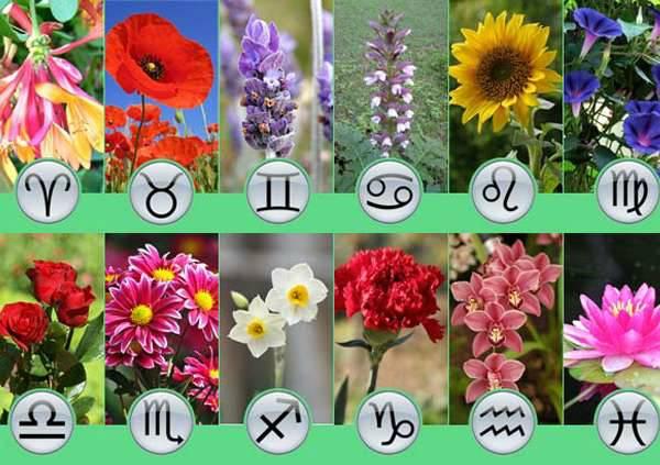 Какие цветы дарить женщинам разных Знаков Зодиака?