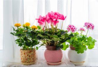 Цветочные приметы — вот, что могут рассказать цветы на вашем подоконнике