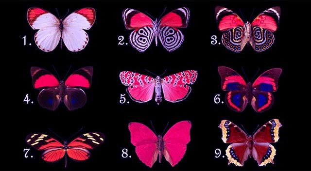 Выберите бабочку и узнайте, какие мысли скрывает ваше подсознание