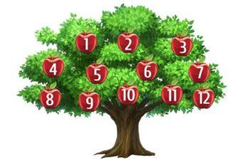 Тест: Выберите яблоко и узнайте, исполнится ли ваше желание