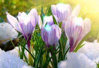 10 весенних примет на счастье