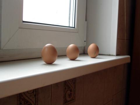 Колумбово яйцо в день Весеннего равноденствия