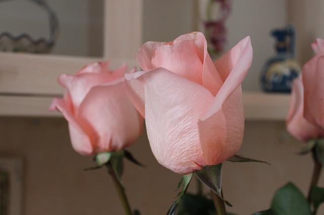 Как выбрать розы по знаку зодиака