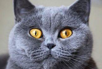 Какая кошка подходит вам по Знаку Зодиака